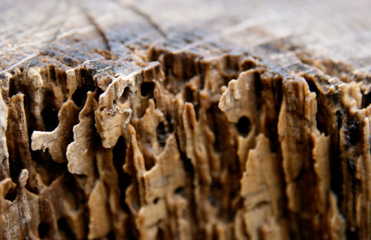 termite and pest inspections